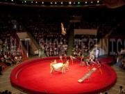 014-almaty-circus